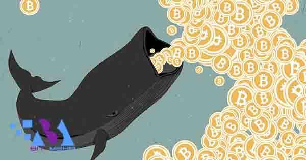 تکنیک های نهنگ ها در ارز دیجیتال